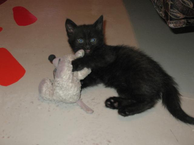 Кошка с мышкой. Кошки-мышки