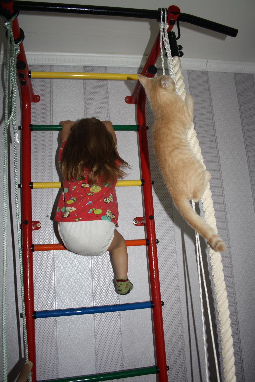 Давай кто выше?!. Закрытое голосование фотоконкурса 'Кошки-мышки'