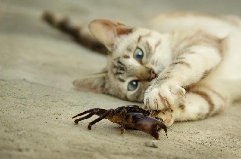 Неведома зверушка. Закрытое голосование фотоконкурса 'Кошки-мышки'