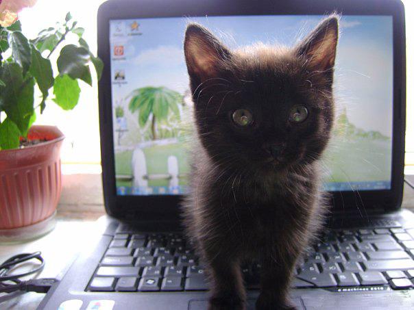 Кот неведимка. Кошки-мышки