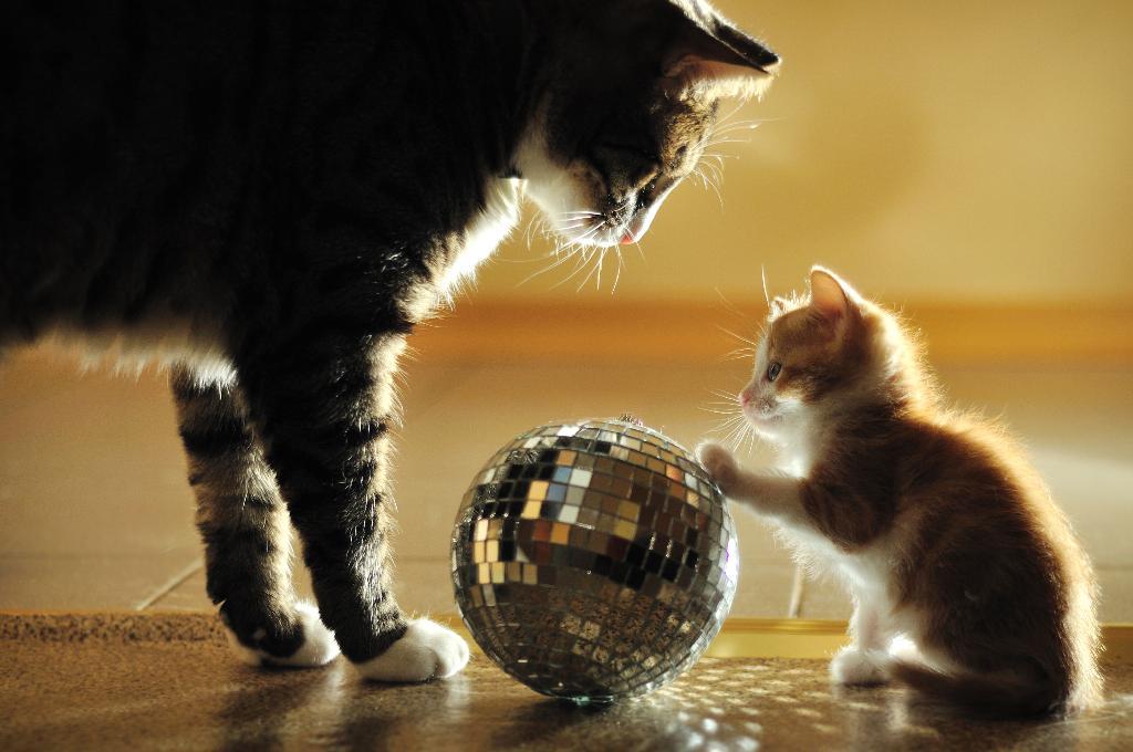 поиграем?. Закрытое голосование фотоконкурса 'Кошки-мышки'