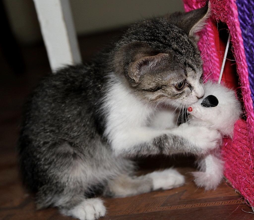 Мышка в лапках. Кошки-мышки
