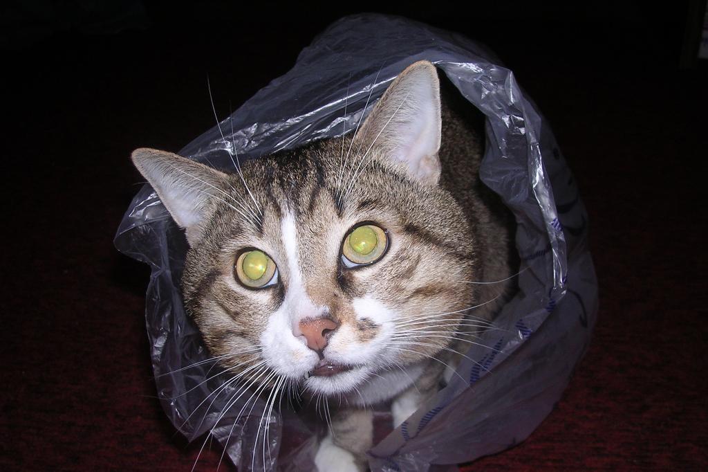 Ну вот...и в пакете нашли меня. Кошки-мышки