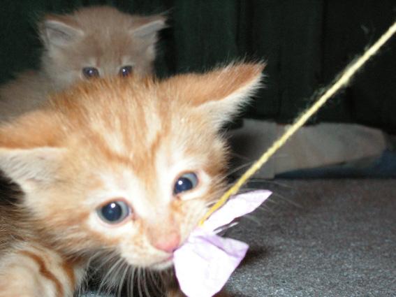 Тигр-мыгр. Кошки-мышки