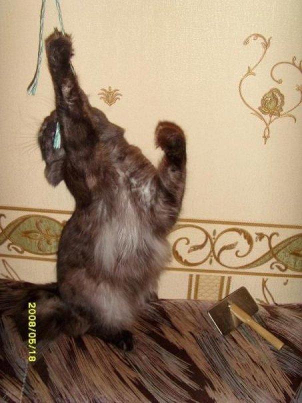 Дотянулся!!!. Кошки-мышки