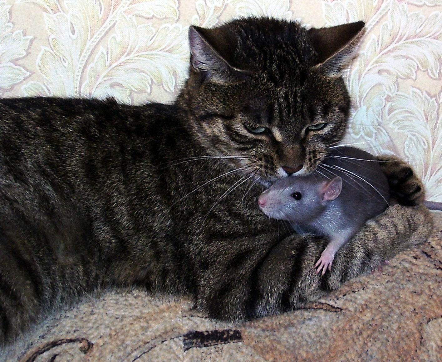 кошки-мышки5. Кошки