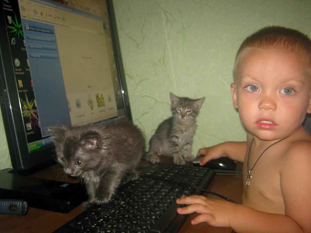 димуся . Кошки-мышки