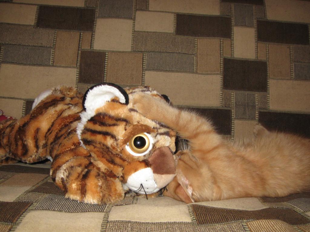 котик с тигром любовь))))). Кошки-мышки