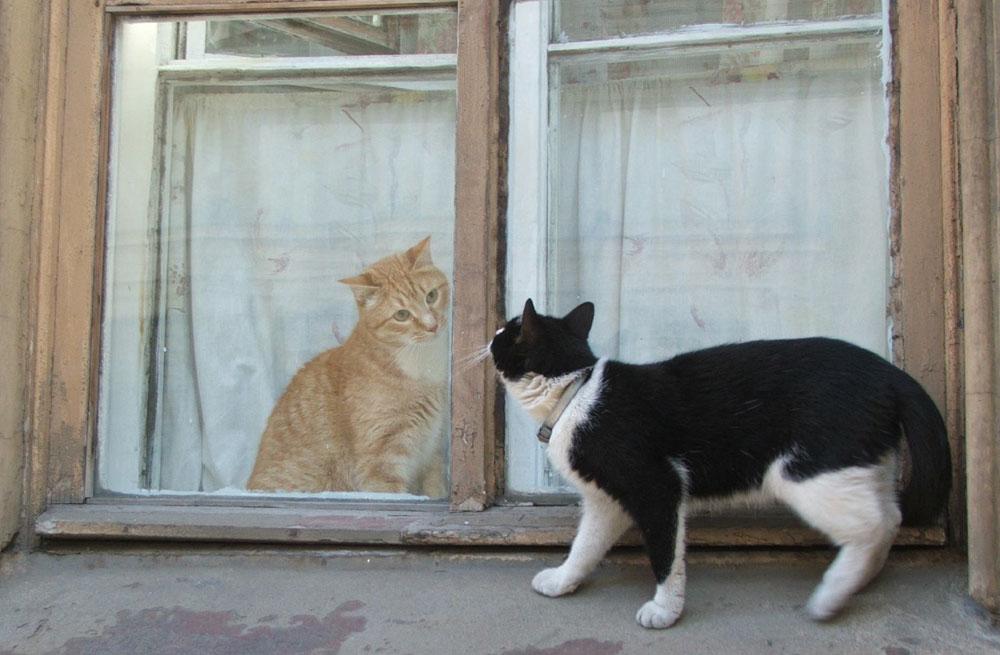 Кошки-кошки. Кошки-мышки