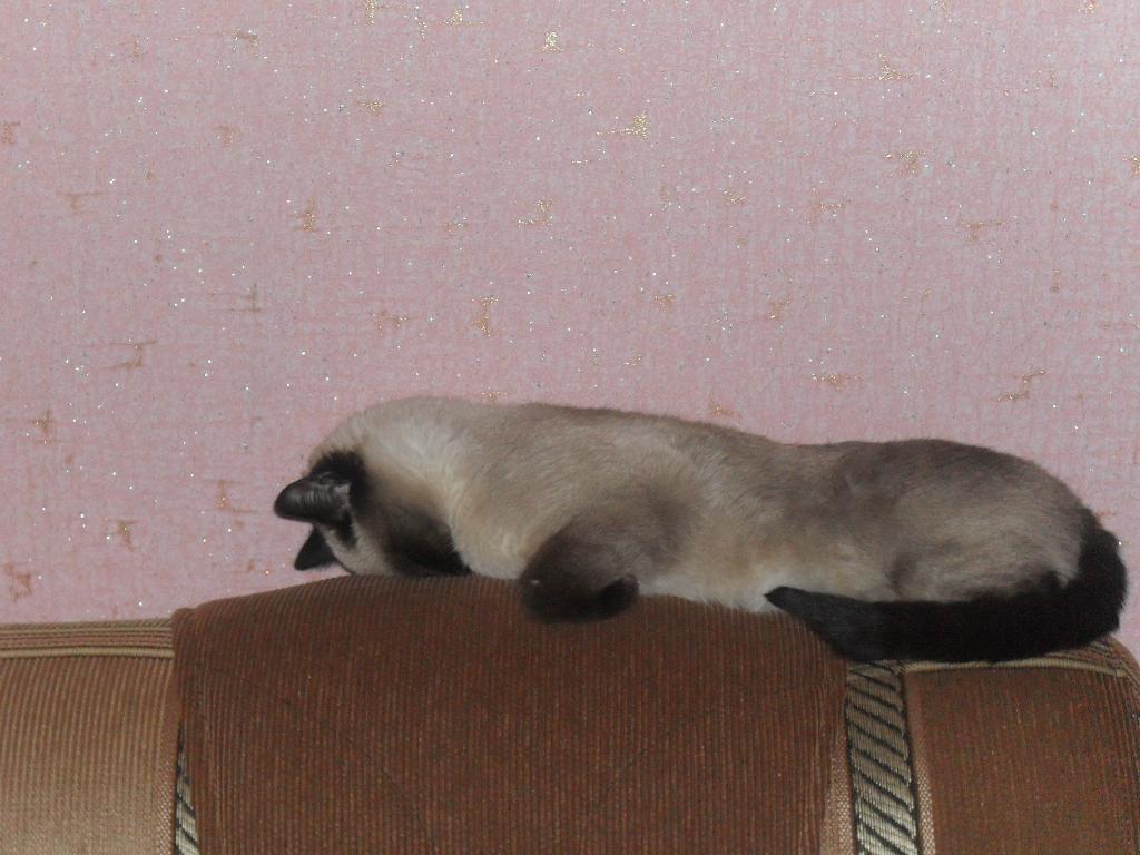 Лиза. Кошки-мышки