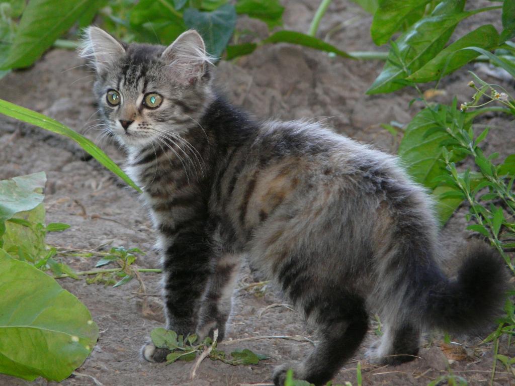 Пушинка))). Кошки-мышки
