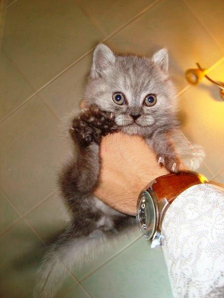 Вот и попалась,мышка!. Кошки-мышки