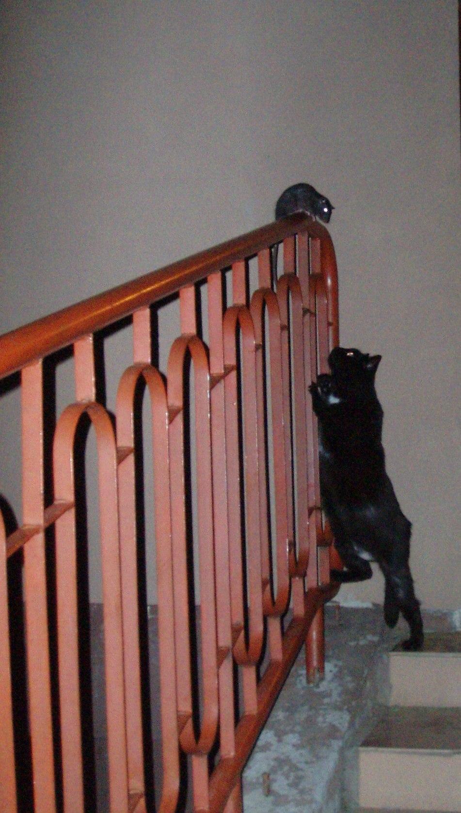 Наш охотник. Кошки-мышки