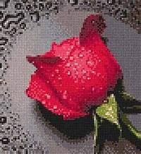роза в росе. Растения (в основном цветы)