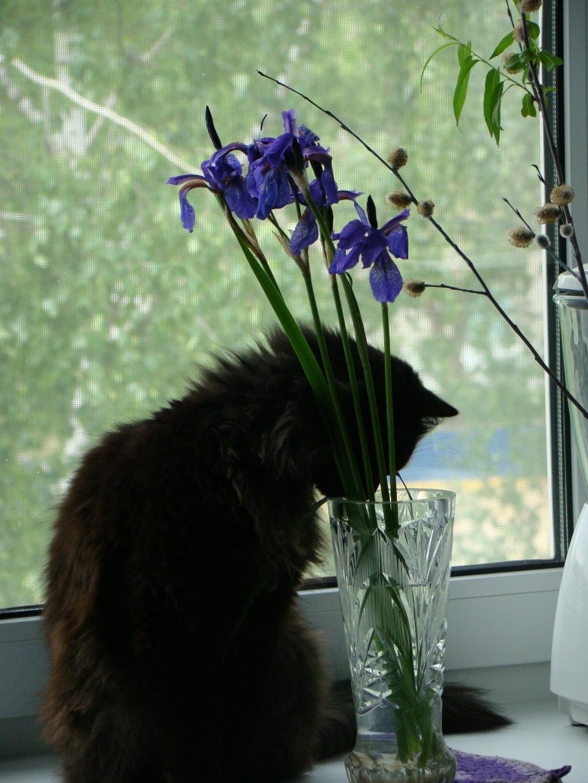 С ирисами. Закрытое голосование фотоконкурса 'Кошки-мышки'