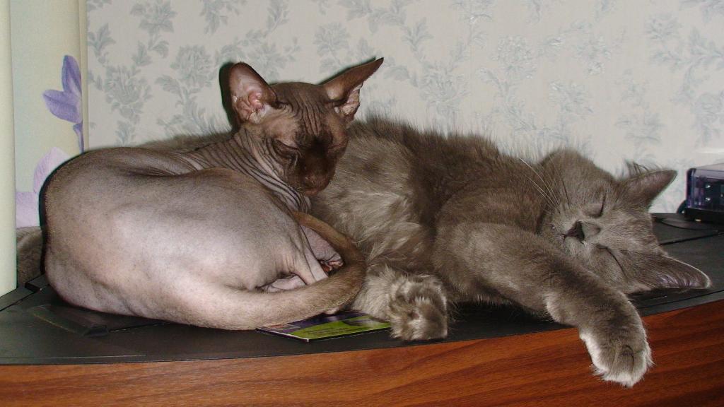 сладкосплюши. Кошки