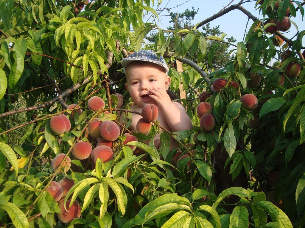 Самый сладкий персик  нашем саду!!!. Закрытое голосование фотоконкурса 'Мое первое лето'
