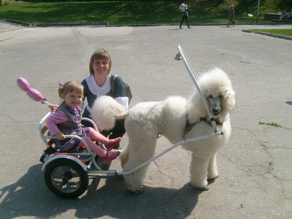 Покатай меня, красивая собачка!. С мамой на прогулке