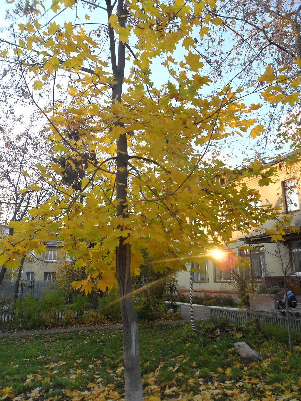 Золотой свет в окне..... Блиц: осенние листья