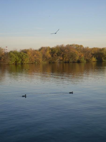 Осень. Блиц: осенние листья