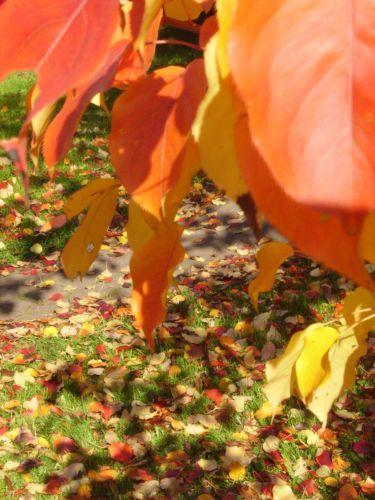яркие краски природы. Блиц: осенние листья