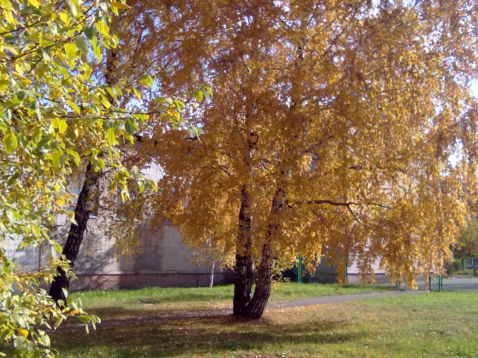 Жёлтые листочки. Блиц: осенние листья