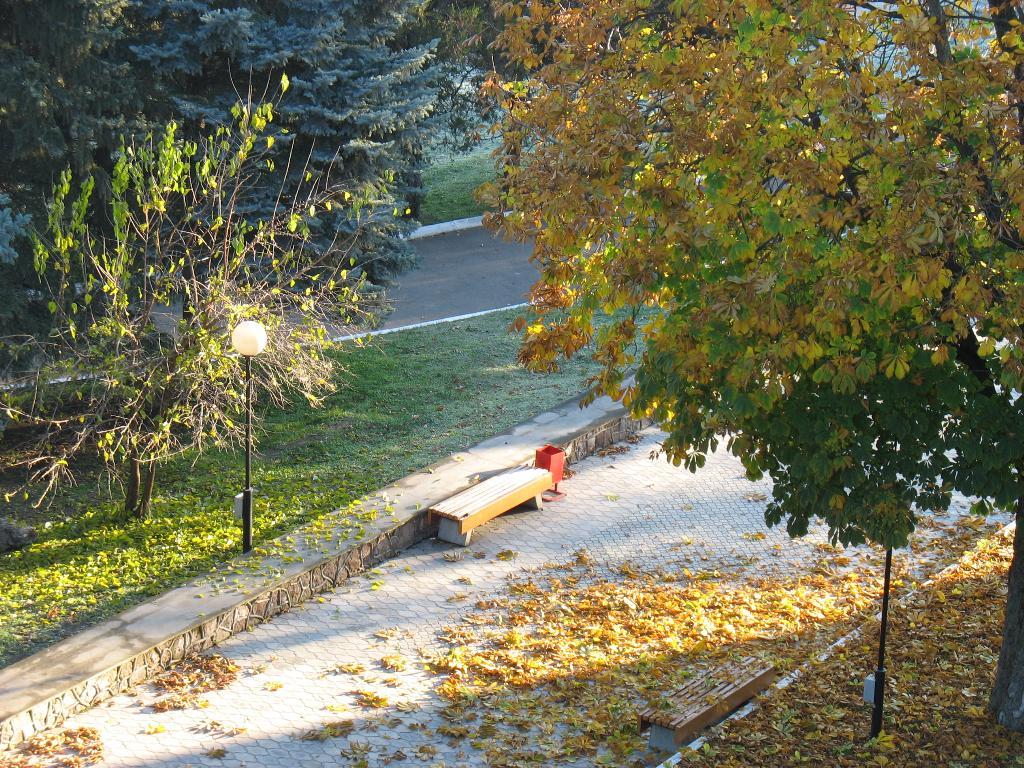 Морозное осеннее утро. Блиц: осенние листья