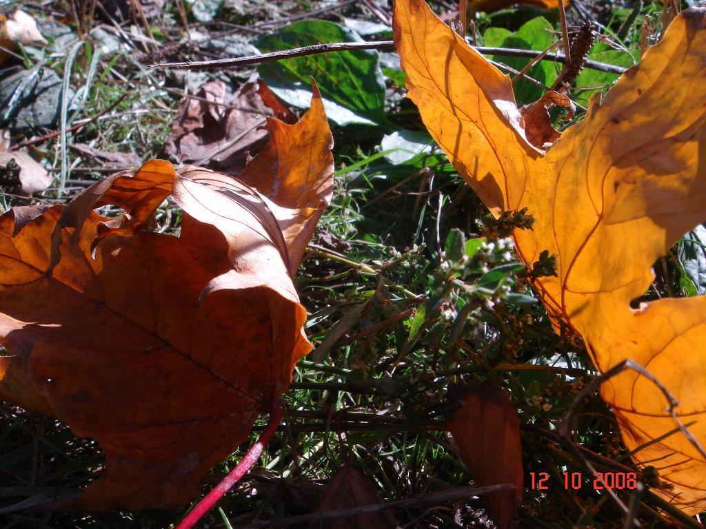 Солнечная осень. Блиц: осенние листья