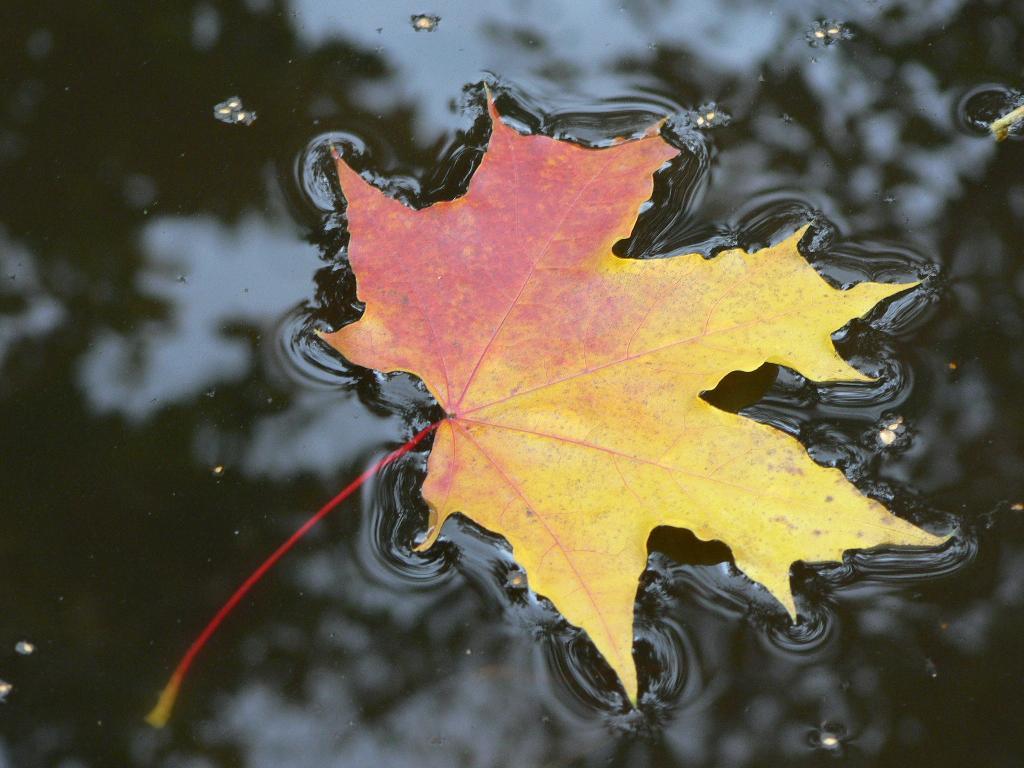 просто осень. Блиц: осенние листья