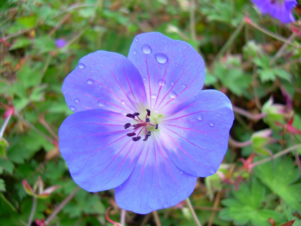 Голубое чудо. Цветы