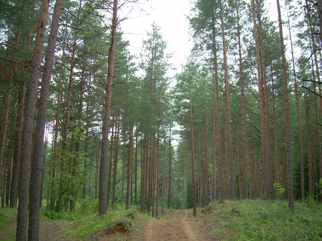 Лесная дорога. Лесной пейзаж
