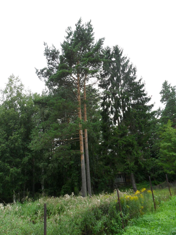 Стоит одиноко. Лесной пейзаж