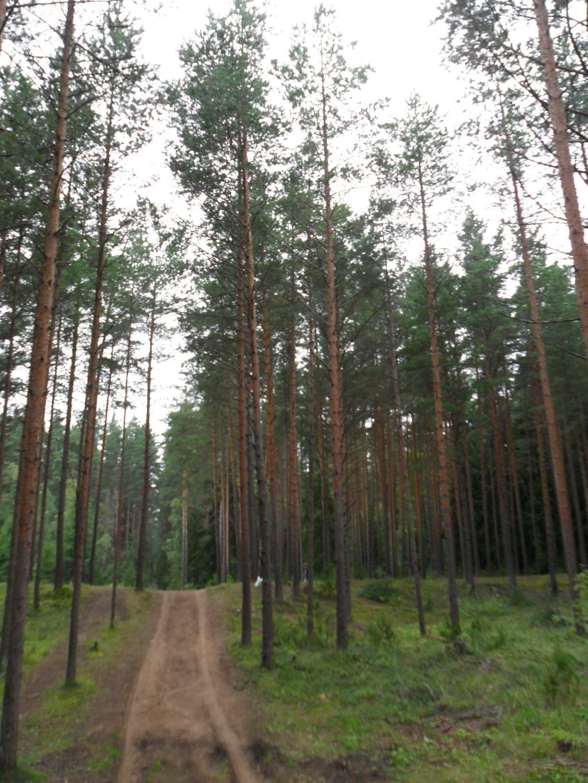 Лесная тропинка. Лесной пейзаж
