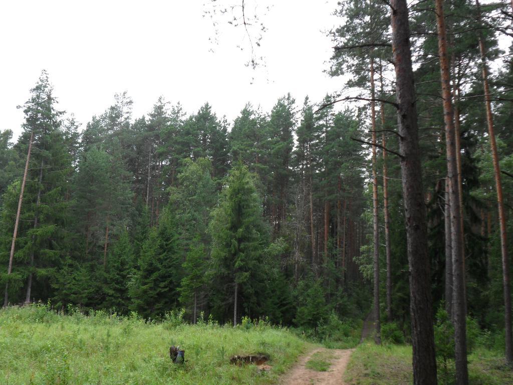 Лесная полянка. Лесной пейзаж
