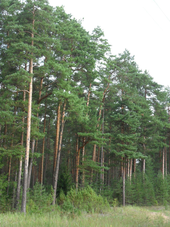 Лес. Лесной пейзаж