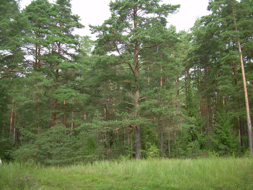 В лесу. Лесной пейзаж