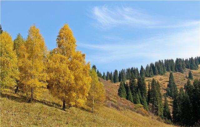 Казахстан Алматы 'Кым Асар'. Блиц: осенние листья
