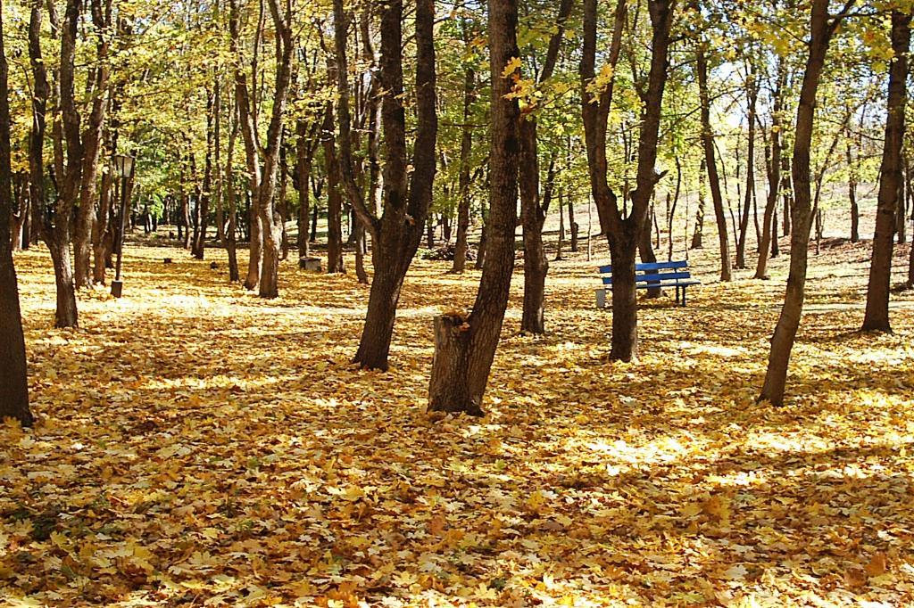 Здравствуй утро золотое.. Блиц: осенние листья