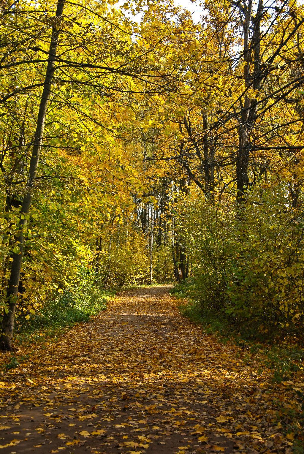 Подмосковная осень.... Блиц: осенние листья