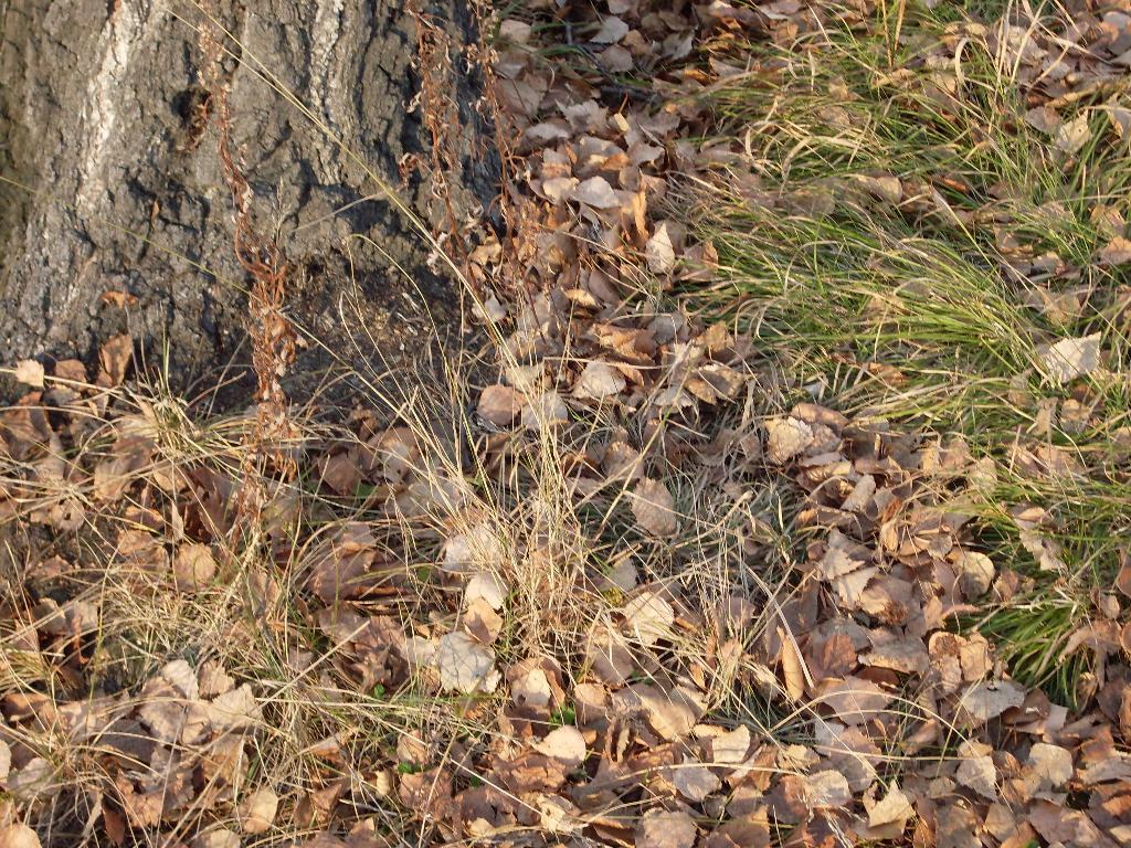 Увядание. Блиц: осенние листья