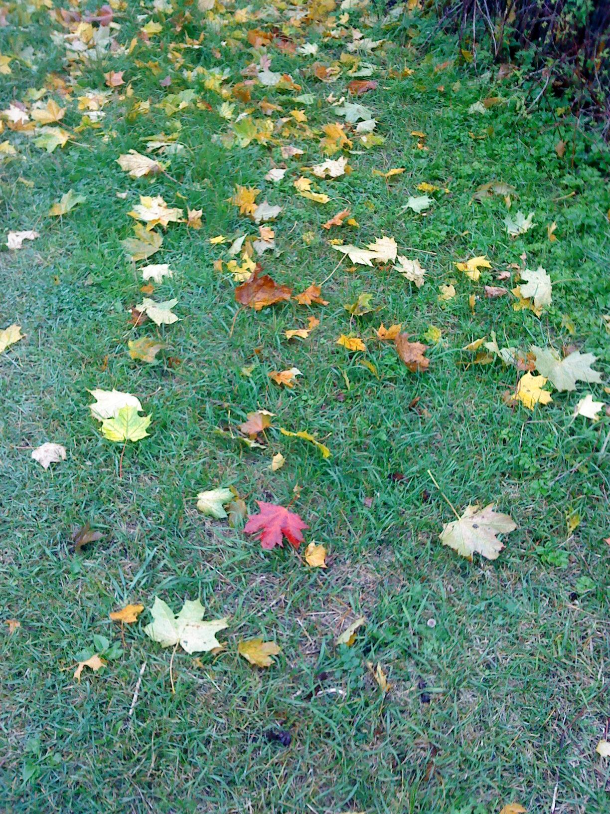 Осенняя дорожка. Блиц: осенние листья