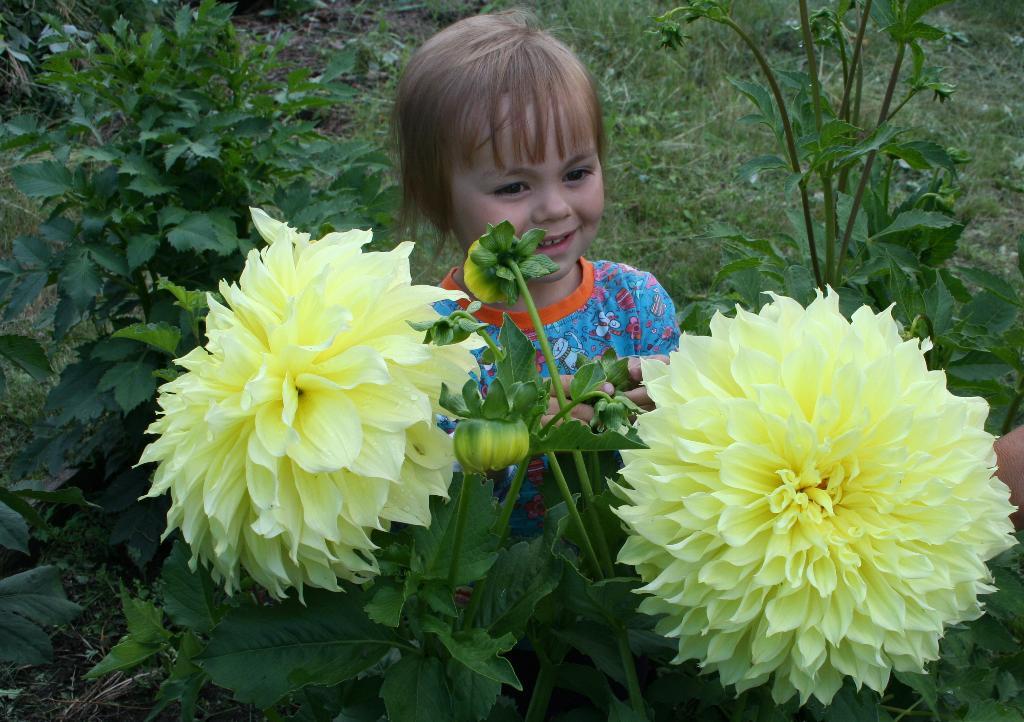 Два солнышка.. Цветы