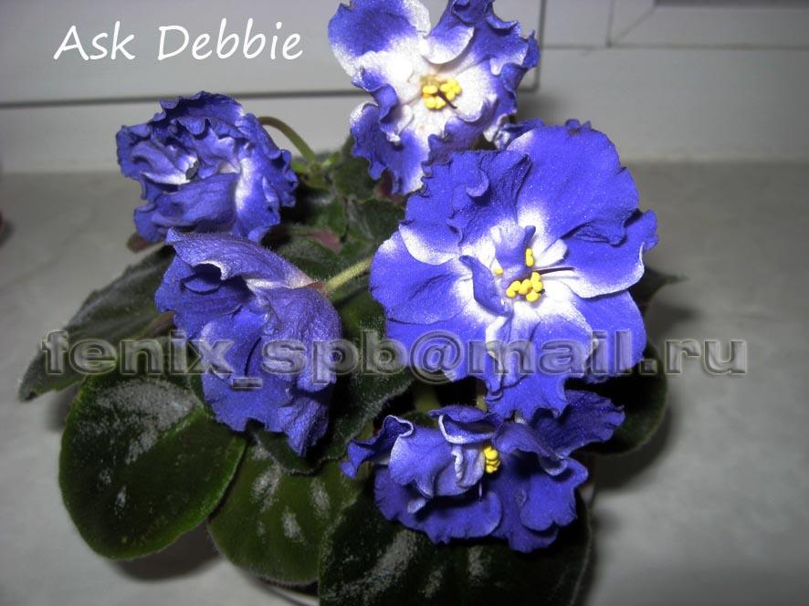 Ask Debbie. Растения комнатные