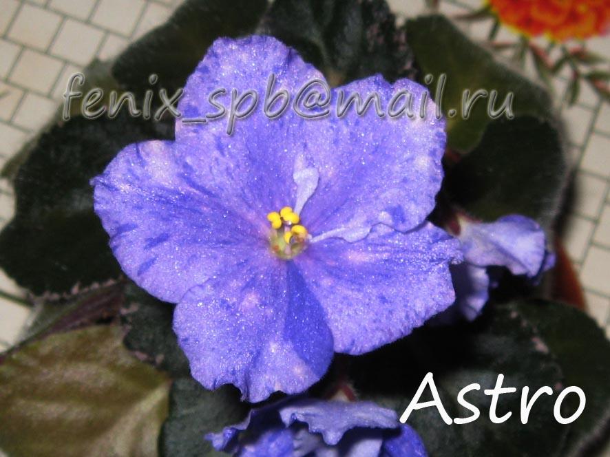 Astro. Растения комнатные