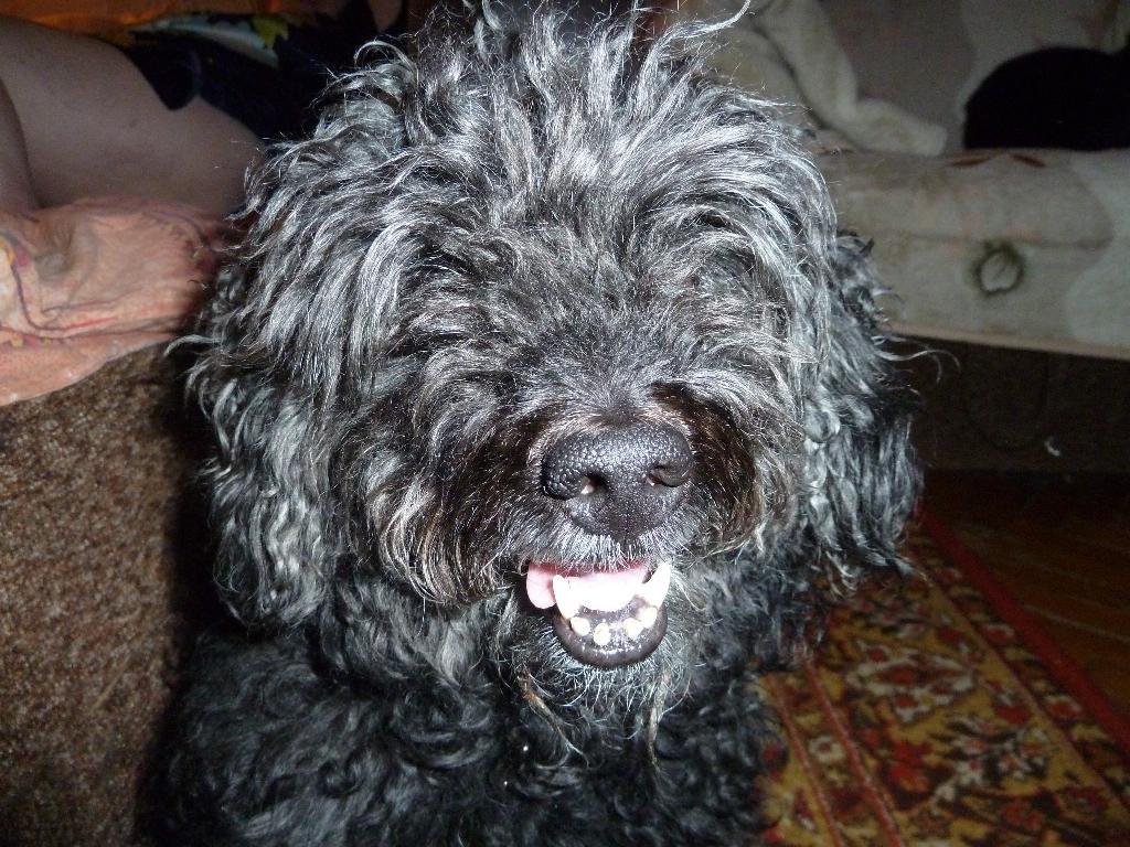 Просто Филя ;)).....Голивудская улыбка))). Собаки