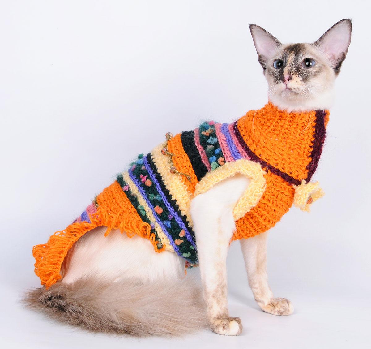 картинки кошек на одежде отец национальности
