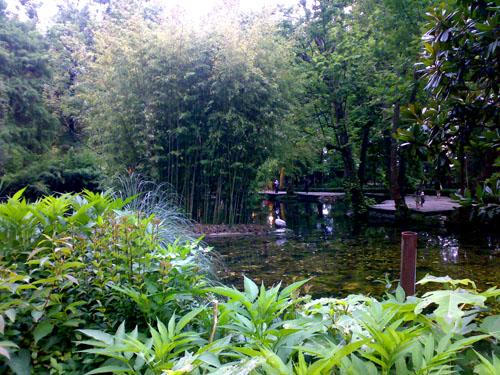 Запущенный пруд. Блиц: водоемы