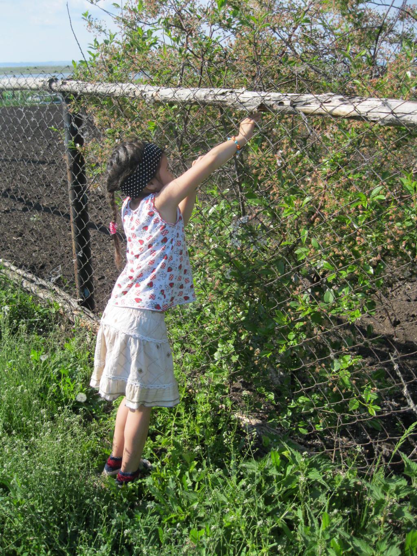 Вот и вишенька цветет, скоро ягодка пойдет.. уДачное детство
