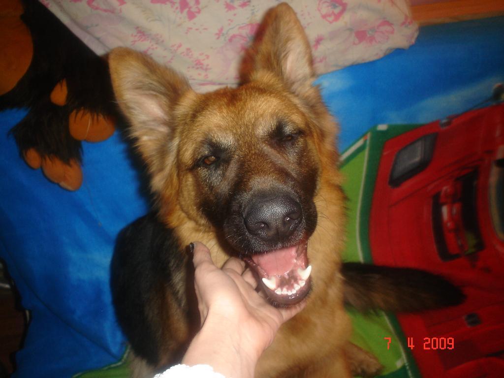 Моя любимая собачка!. Блиц: собаки
