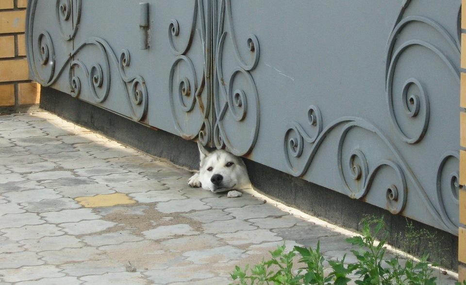 Как же скучно во дворе!. Блиц: собаки